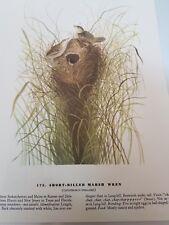 JOHN AUDUBON PRINT #175. SHORT BILLED MARSH WREN. VINTAGE BOOK PRINT. BIRD.
