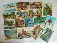 Postcards of Dinosaurs and ancient animals ussr 1983  Greeting Post Card