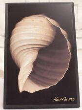 Sea Shell Print on Wood Plaque Harold Feinstein Nautical NEW 6 By 9 inch