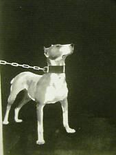 John Held 1930 UNDERGROUND BULL TERRIER Print Matted