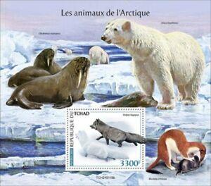 Chad - 2021 Arctic Animals, Arctic Fox - Stamp Souvenir Sheet - TCH210118b