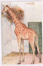 RAPHAEL TUCK - ANIMAL STUDIES - The Giraffe  - Art Drawn - c1905