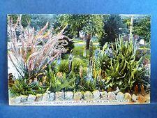 Postcard TX San Antonio Beautiful Scene in Alamo Plaza Pre 1919