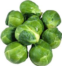 Brussels Sprouts 1000 seeds * Non GMO * ez grow * CombSH E18