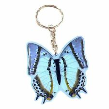 Real Insect Butterfly Key Ring/Chain Charm - Polyura Eudamippus (Nawab Leafwing)
