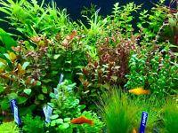 10 Wasserpflanzen, Bund Aquariumpflanzen, Wasserpflanzen Set 2,39€ je Bund