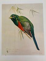 "Louis Agassiz Fuertes & The Singular Beauty of Birds, ""Narina's Trogon"" Print"