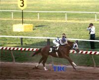 SECRETARIAT & RON TURCOTTE - 8X10 ORIGINAL 1973 PREAKNESS STAKES PHOTO!