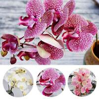 Artificial Butterfly Flower Orchid Fake Silk Flower Wedding Party Home Decor UK