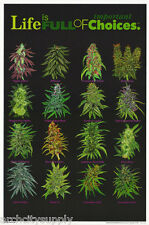 POSTER:MARIJUANA: LIFE IS FULL OF IMPORTANT CHOICES -FLOCKED   - #FL3205F RP69 G