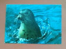 Schöne Ansichtskarte Neugieriger Seehund