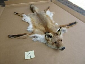 Red fox skin with a head, tanned skin, fur, trophy, taxidermy, carpet, pelt