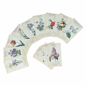 Educational Toy Simulation Beginner Tarot Card Set Fortune Telling Guidance