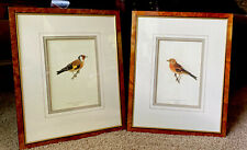 PAIR Antique Bird Lithograph Fringilla & Carduelis Bird by VON WRIGHT 16X20 Each