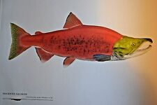 "Great fish Pictures SOCKEYE SALMON FRAMED 18""x12"""