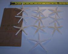 10 WHITE STARFISH STAR FISH SEASHELLS Wedding Crafts Decor ITEM # 16-L