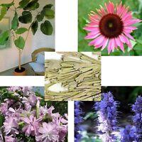 Fünf schöne Pflanzen für Ihr Glücklichsein und Wohlbefinden !