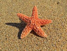 Ariel Starfish Mermaid Hair Clip Beach Nautical Summer Halloween Accessories