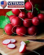 radish seeds 300+ seeds 'Cherry Belle' Vegetable seeds