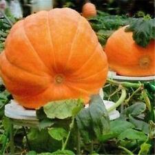 FD1037 Pumpkin Seed Giant Pumpkin Vegetables Seed Tender Juicy Healthful 5pcs A