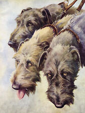 More details for irish wolfhound dogs head study old 1930's nina scott langley dog art print