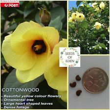 10 RED COTTONWOOD SEEDS (Hibiscus Tiliaceus); Ideal ornamental tree for garden