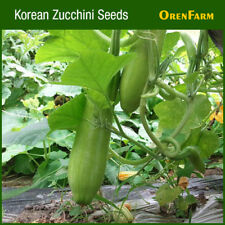Korean Zucchini Seed (30 seeds), Squash Seed, Vegetable Seed 애호박, 호박