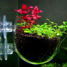 Aquarium Fish Tank Aquatic Crystal Glass Pot Plant Cup Holder with Suction Cup
