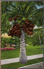 (zbi) Postcard: Coconuts in Florida