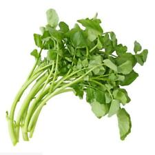 200 pcs vegetable Seeds Watercress Nasturtium officinale