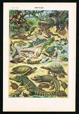 1922 Reptiles, Snakes, Lizards, Turtles, Tortoises, Antique Larousse Print