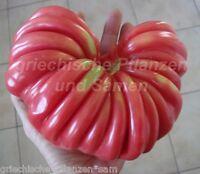 PITANGA Tomate 10 Samen SEHR SELTEN Tomaten ertragreich alte Sorte samenfest