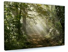 STUNNING WOODLAND FOREST CANVAS PICTURE PRINT WALL ART CHUNKY FRAME LARGE 997.3