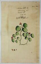 """Van Rheede's - """"KARINTA KALI"""" - Hortus Indicus Malabaricus, Engraving  -1686"""