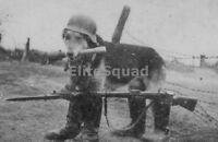 WW2 Photo Picture German dog with Mauser k98 and potato masher granade 282