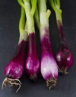 8g 파 Home Garden Longs White Spring Onion Seed Allium fistulosum