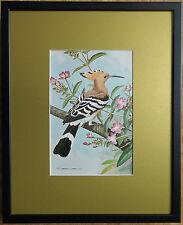 Basil Ede, 20''x16'' frame, Framed Bird wall art, Hoopoe print