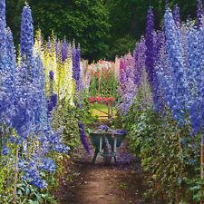 """VIERGE CARTE """" Haut Jardin Fleurs """" grand carré taille 15.9cmx15.9cm rhii 2046"""