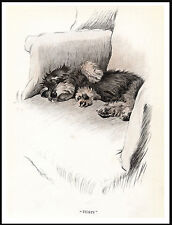 DANDIE DINMONT TERRIER CUTE PUPPY ASLEEP IN A CHAIR LOVELY DOG PRINT POSTER