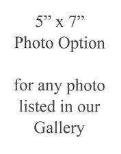 "5"" x 7"" Print Option"