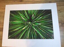 Original Dale Paul Photographic Print Flourecent Yucca with mat 16 x 20