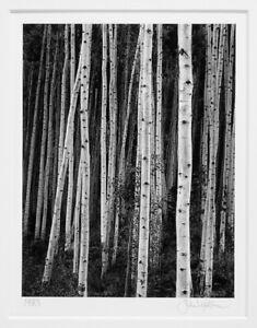 "JOHN SEXTON ORIGINAL 1983 ASPENS AT DUSK, NEAR ASPEN COLORADO 5.5""X7"" PHOTOGRAPH"