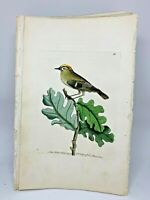 Golden-crowned Wren - 1783 RARE SHAW & NODDER Hand Colored Copper Engraving