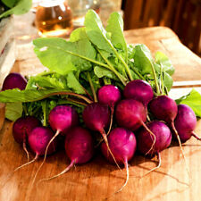 VEGETABLE - RADISH - VIOLET - MALAGA -  750 seeds - vegetable