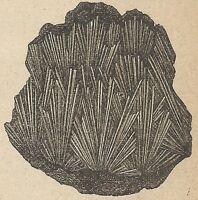 A4331 Antimonio - Incisione - Stampa Antica del 1887