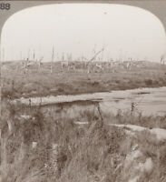 WW1 Stereoview. Battlefield of Nieuport Where We Pushed Back the Enemy Thrust