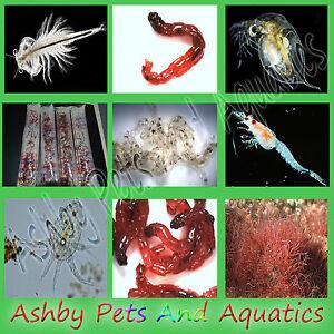 LIVE FISH FOOD BRINE SHRIMP artemia DAPHNIA Blackworm BLOODWORM TUBIFEX copepods