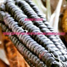 SWEET CORN 'Aztec Black' Zea mays 10 seeds =RARE=UNTREATED= =NON~GMO= JENNIGNITE