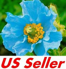 50 PCS Perennial HIMALAYAN BLUE POPPY Seed F52, Plant Flowers Seed US Seller