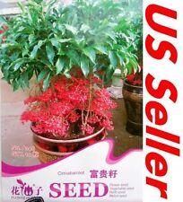 10 PCS Cinnabarroot Seeds B79, Ardisia Crenata Sims Rich Seeds Flower US Seller